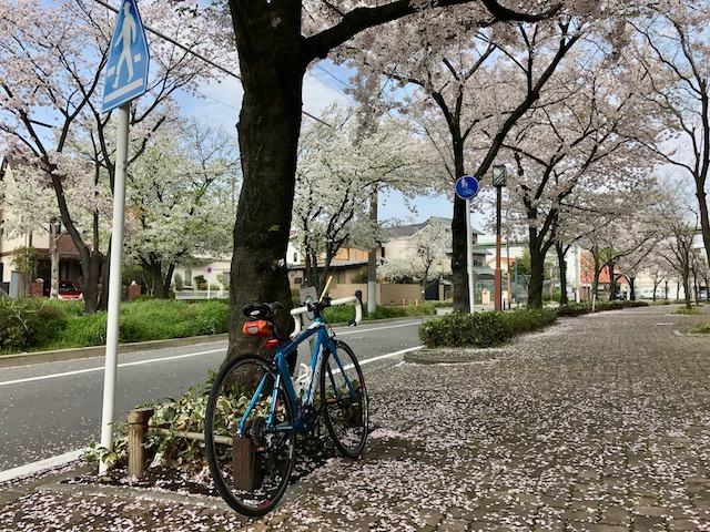 お花見サイクリング 名鉄瀬戸線の森下駅から東大手駅間の桜並木