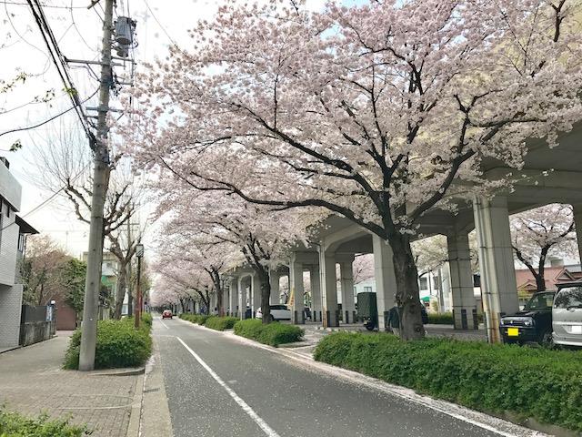 お花見サイクリング 名鉄瀬戸線の森下駅から東大手駅間の桜並木3