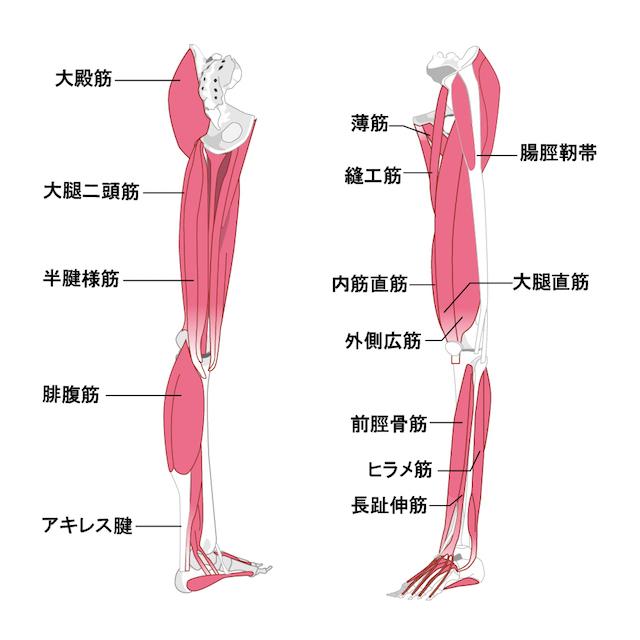 ペダリングに必要な筋肉