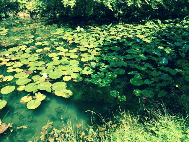 TOJ美濃ステージと中濃周遊ライド モネの池